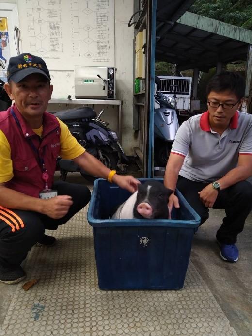 動保員協助辦理豬隻送養手續