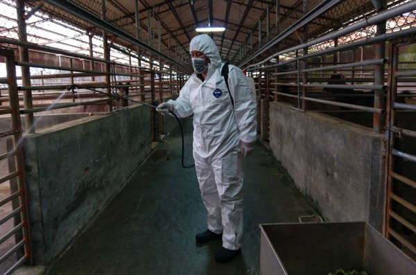 動保處協助養鹿戶防疫消毒