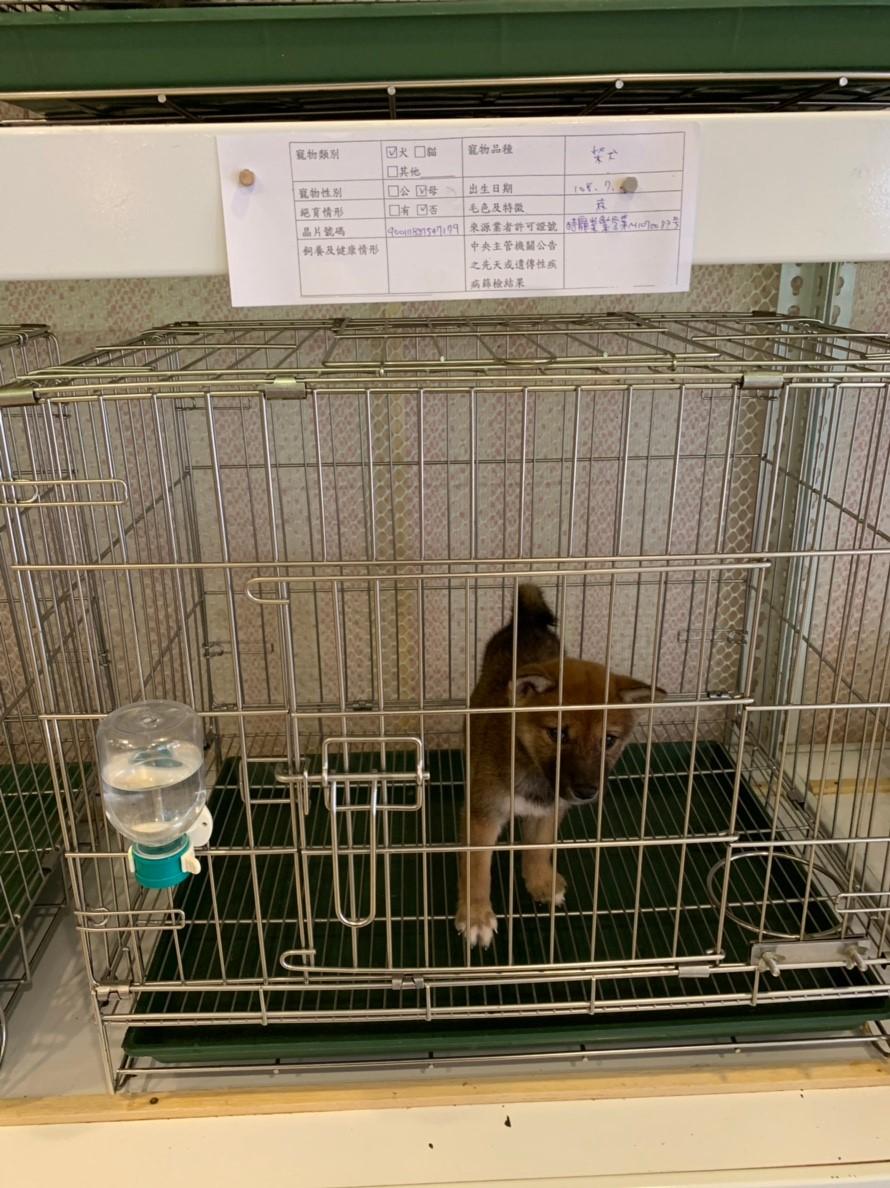店內犬隻飼養情況