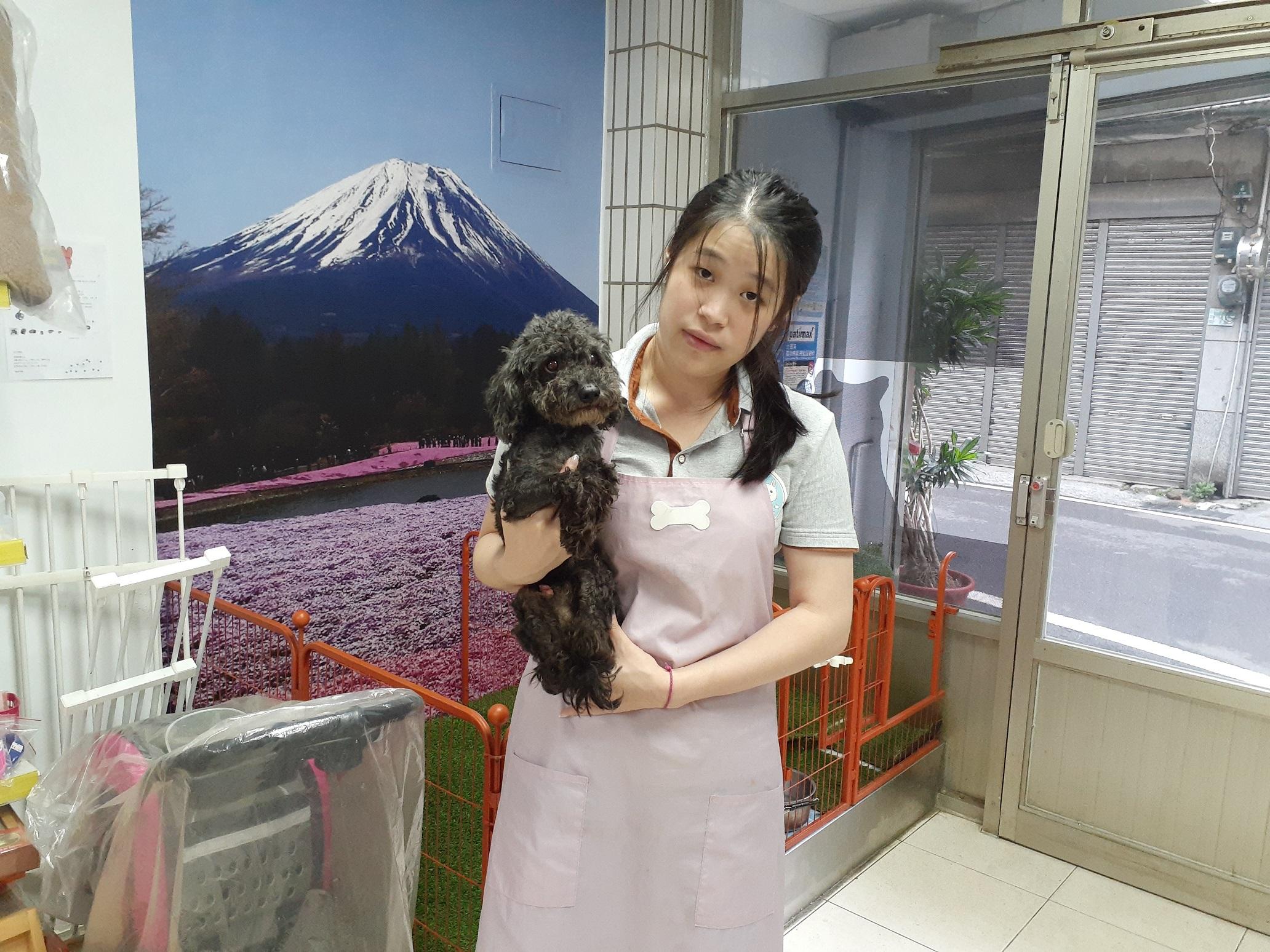 認養小棧有專業美容師為犬隻梳洗