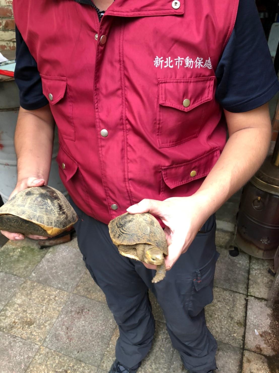 現場查獲食蛇龜2隻