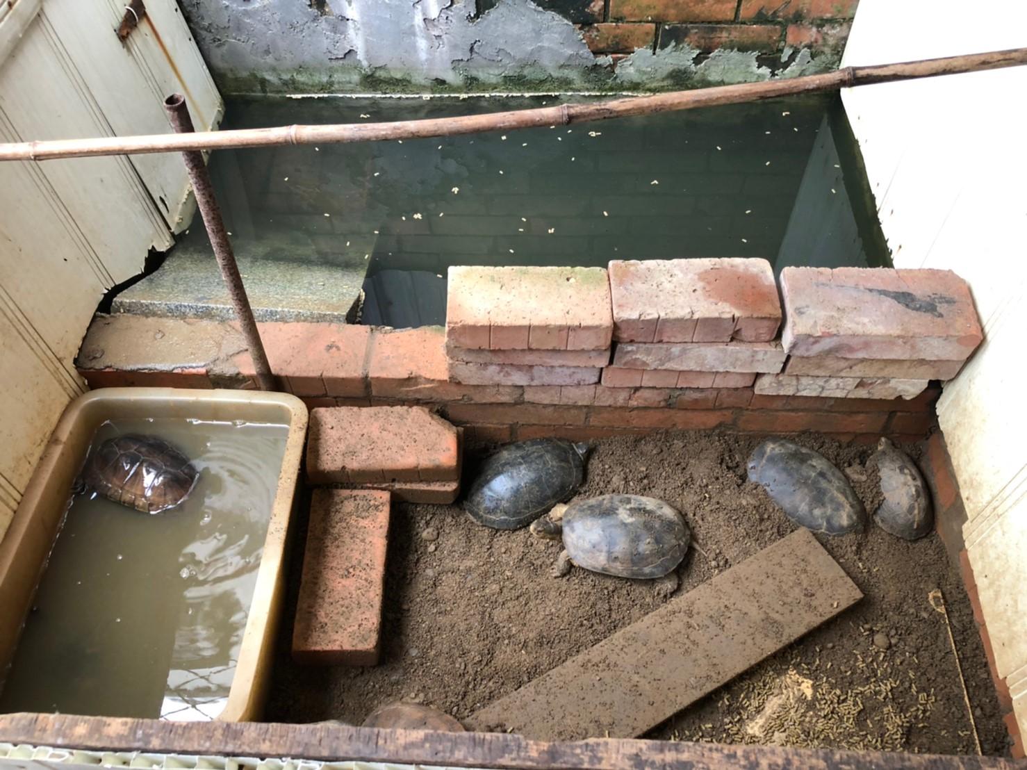 龜隻飼養環境